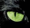 Аватар для Лерочка Кустова